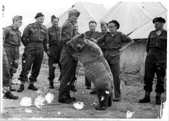 wojtek-soldier-bear-iwm