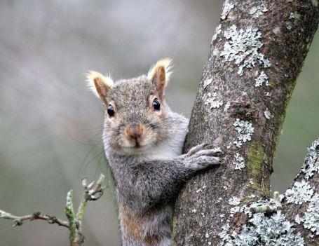 77a30e40b50c91e9d36b40d83020330b--tree-photography-funny-squirrel